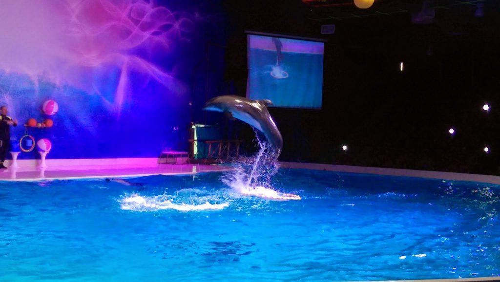 Dolphinarium Dubai