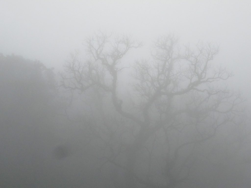 Foggy forest on the way to bhimashankar