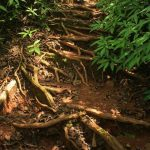 Root path to the mahuli fort